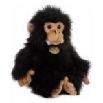 Aurora Chimpanzee