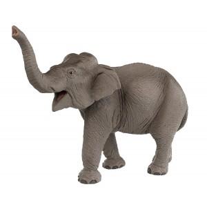 Safari Asian Elephant